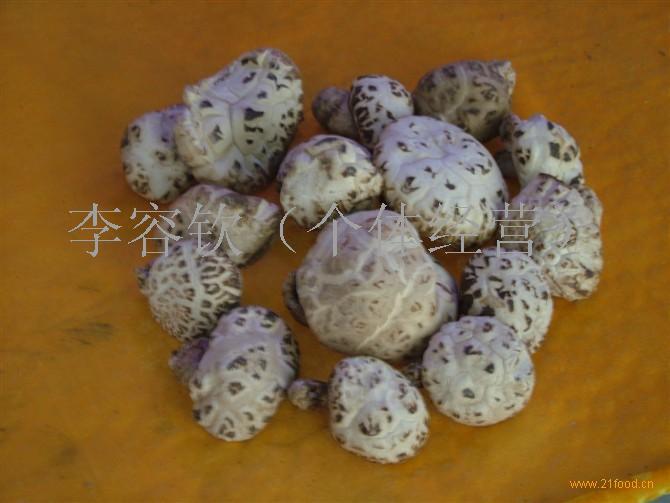 食用菌花菇