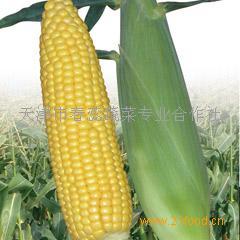 甜(糯)玉米