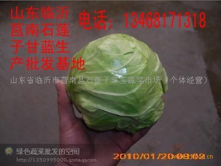 山东甘蓝菜
