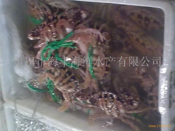 天然活海螃蟹