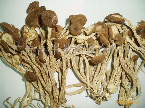 茶樹菇干品
