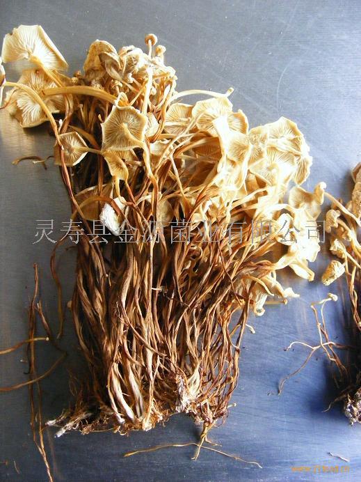 黄金针菇干品