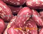 供应红花芸豆