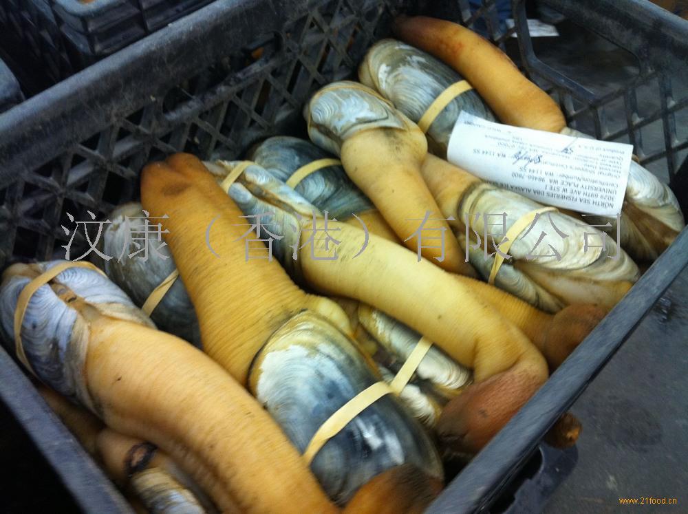 加拿大象拔蚌(北美一手货源)