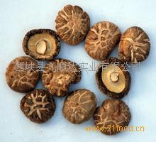 菌床茶花菇