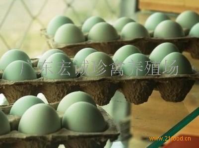 绿壳蛋鸡种苗