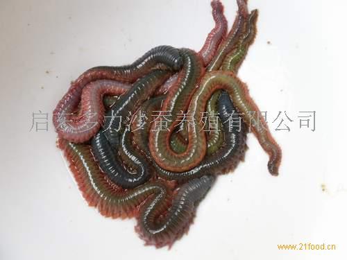 沙蚕结构示意图
