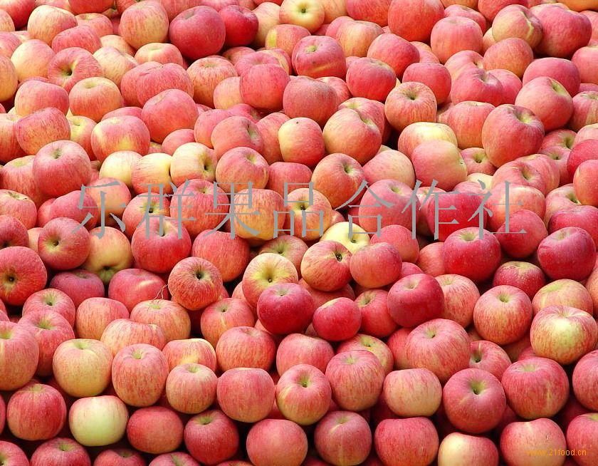 红富士苹果行情信息