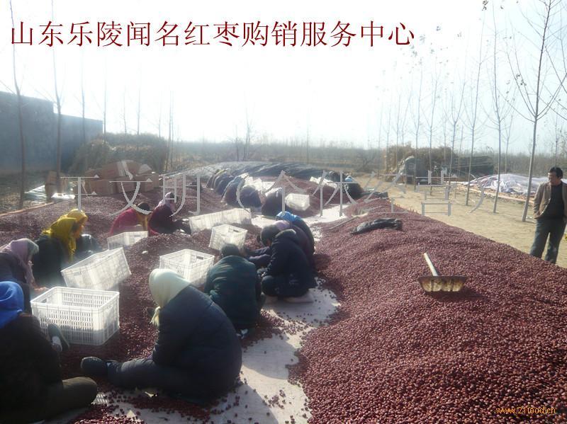 供应生产浓缩枣汁优质原料金丝小枣