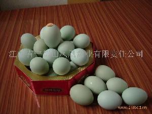绿壳蛋鸡 土鸡蛋
