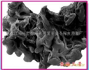 黑木耳菌种雪梅三号