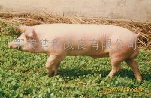 PIC长白L02