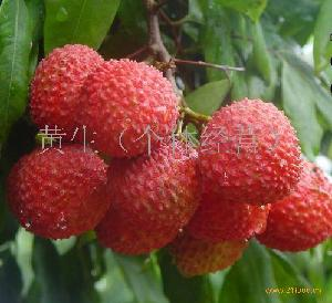 亚热带水果