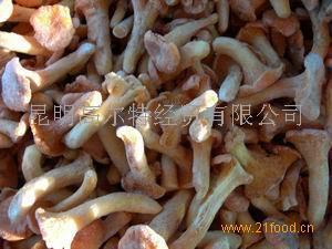 冷凍雞油菌