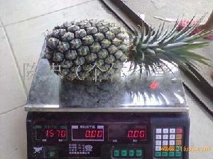 台农17号菠萝(又名金钻菠萝)
