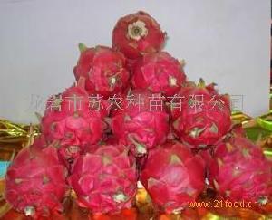 台湾红肉火龙果