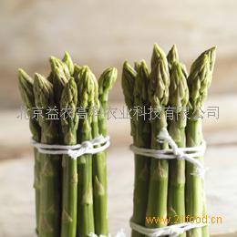 芦笋种子阿波罗
