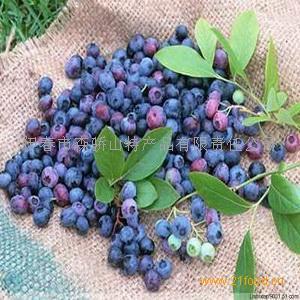 东北野生蓝莓果干