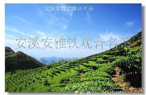安雅微香铁观音茶叶(四级)