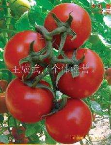 新鲜大西红柿