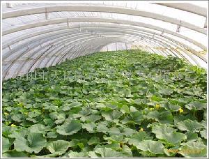 花卉大棚支架天亿温室工程