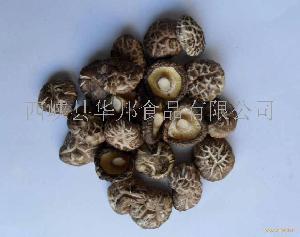 原产地仿木西峡茶花香菇