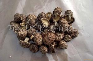 原木红茶花香菇