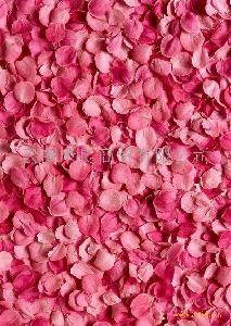 玫瑰干花瓣