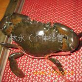 缅甸黑蟹80克