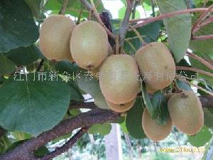 猕猴桃(奇异果)