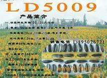 葵花籽LD-5009
