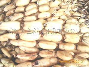 鄂藕杂系列品种