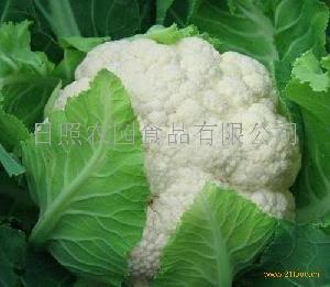 保鲜白花菜