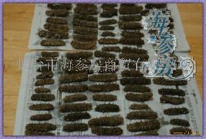 韩国拉缸盐海参