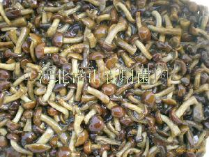 盐渍2*3滑子菇