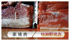特种野猪肉