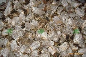 金针菇棉籽壳蛋