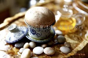 奧達特鮮褐蘑菇