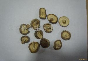 2-3CM 光面香菇
