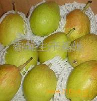 库尔勒优质香梨