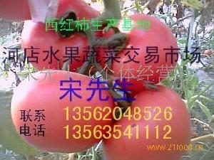 大红西红柿