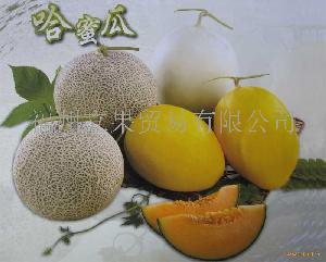 台湾哈密瓜