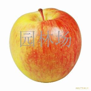 新疆红富士苹果
