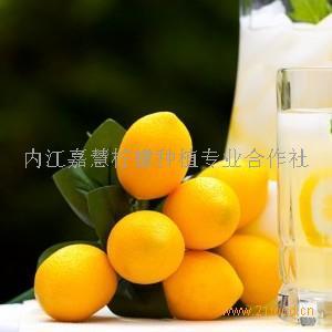 尤力克柠檬