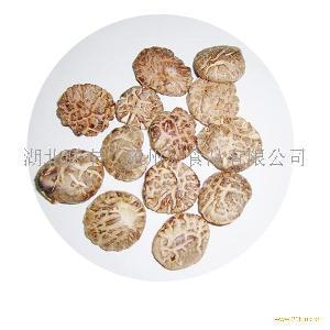 S 红茶花 3-3.5