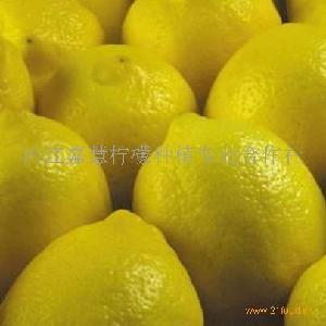 尤力克柠檬批发