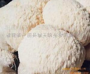 供應批發鮮猴頭菇