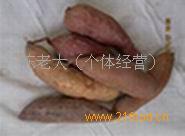沙土地红薯
