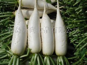 保鲜白萝卜