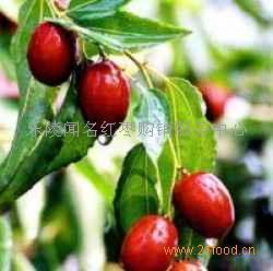 乐陵金丝小枣的深加工产业开发